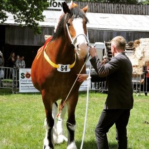 Bath-and-west-show-horse